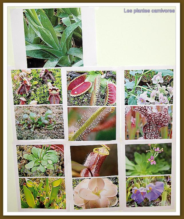 Club nature for Plantes sur internet